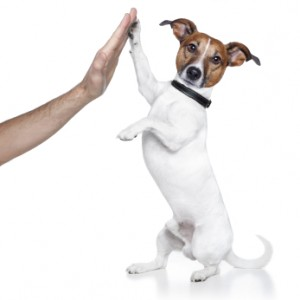 Platinum Builders mascot dog giving high five