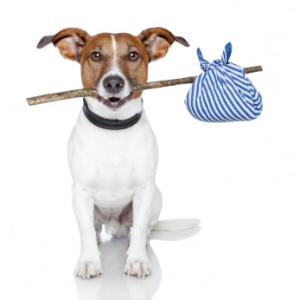 Platinum Builders mascot dog with stick and blue bag